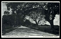 Lot 135:Trinidad: W.H.Y. PPC of 'St. Anns Road looking south, Port-of-Spain, Trinidad, B.W.I.', unused.