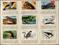 Lot 132 [2 of 5]:Cigarette Cards: John Player Aviary & Cage Birds set of 50, 1960s Shell 'Project Card Album/Birds' set of 60 cards (spine damage to album, cards ok), also duplicated selection of Tuckfields Australiana Birds (50+). Mixed condition. (160+)