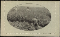 Lot 839 [1 of 2]:1918-20 1½d KGV Sideface 1½d black-brown, view 'PINEAPPLES QUEENSLAND' BW #LC41(102B), very fine unused, Cat $200.