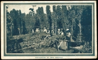Lot 865:1908 Franco-British Exhibition: 'HOP-PICKING AT NEW NORFOLK' in bluish-grey, rare contemporary use at Ulverstone. [Contemporary use is very rare.]